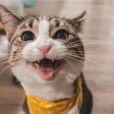 gato masc
