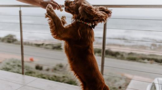 happy-dog-jumping-VC4QRWV