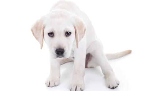 que-hacer-si-un-perro-tiembla