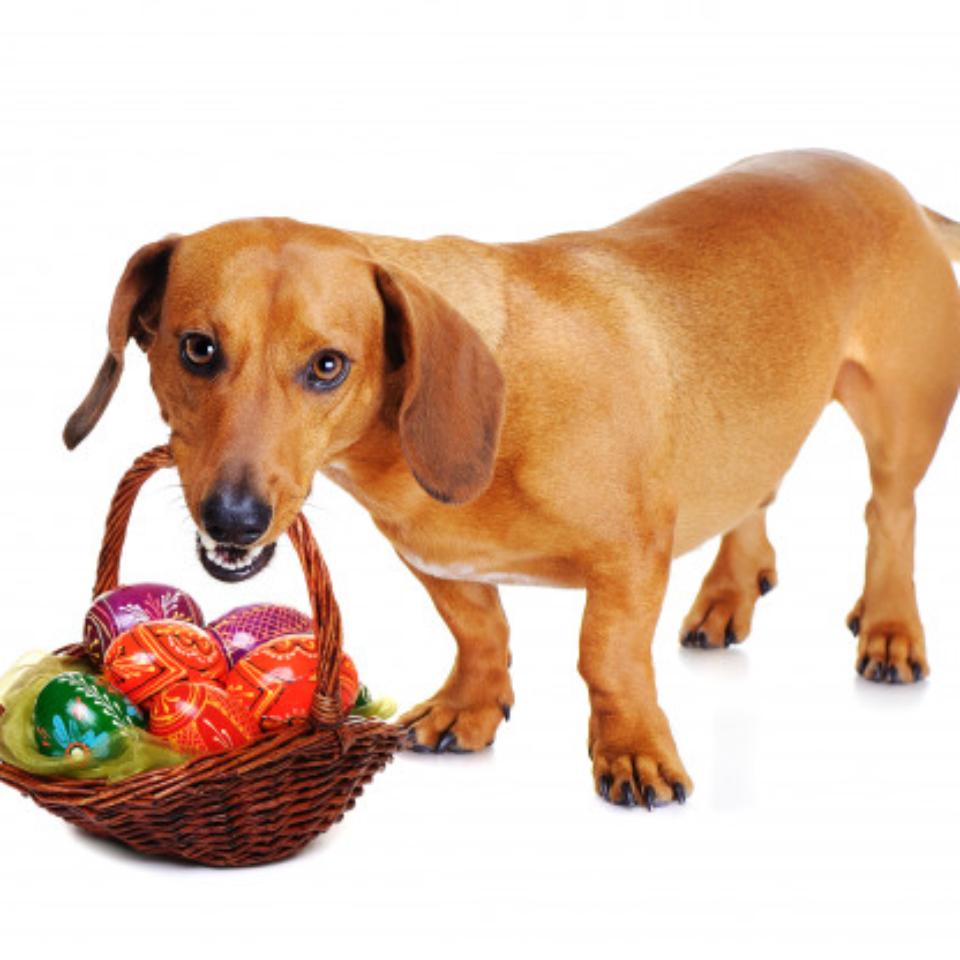 perro-canasta-pascua-huevos-coloridos_174814-216